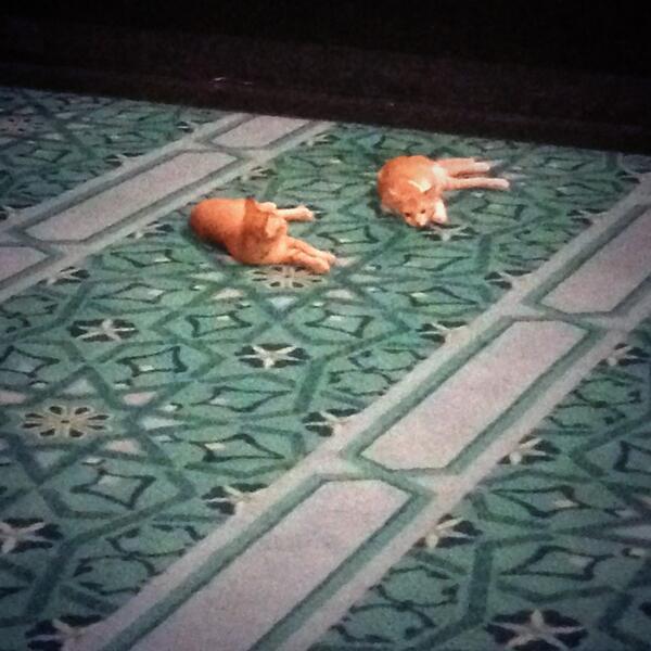 Les deux chats