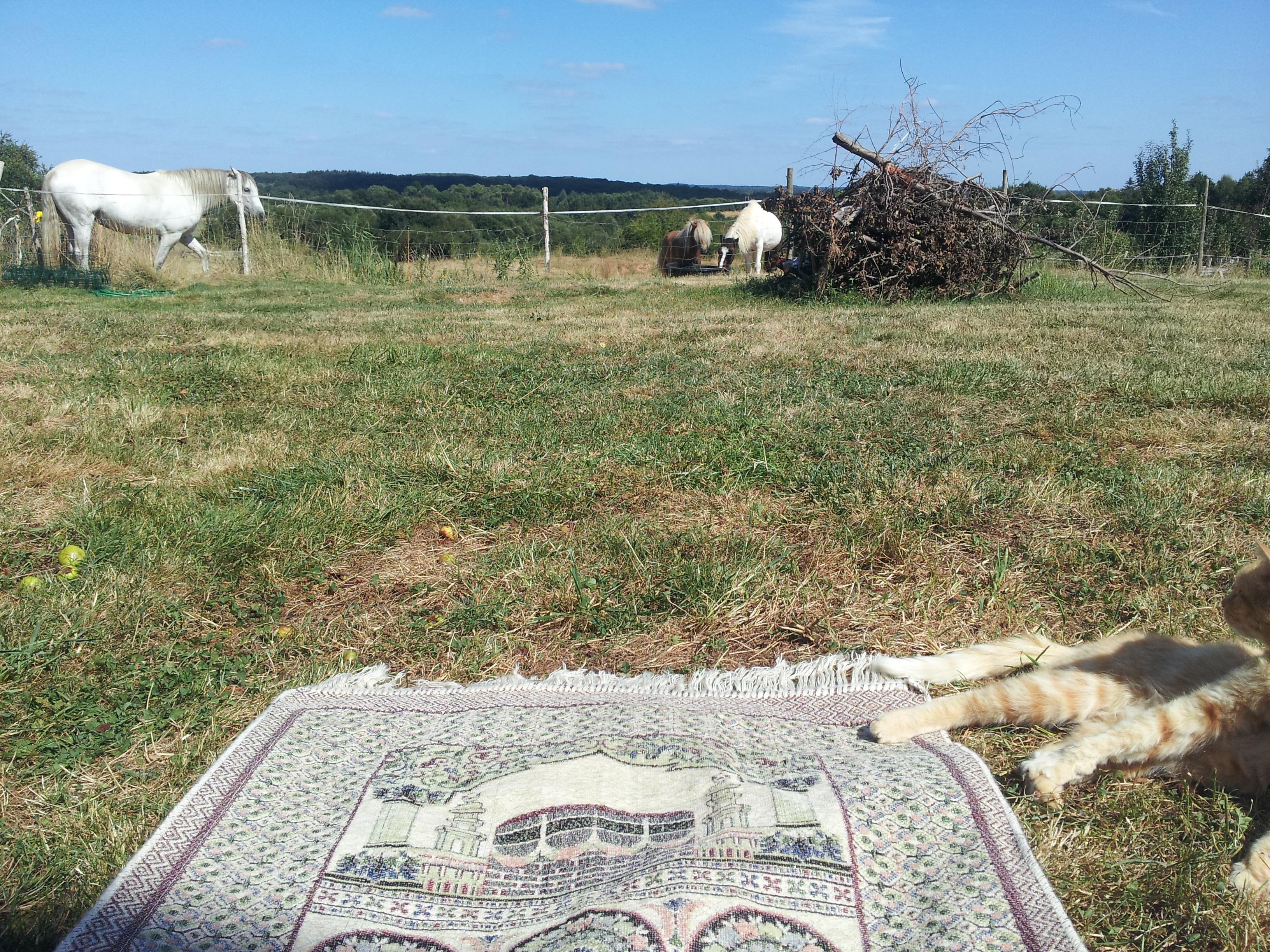 Dans le jardin familiale, l'été en Bretagne