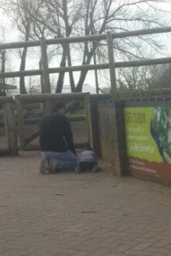 Dans un zoo, devant l'enclos d'une girafe